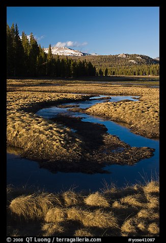 Grasses and stream, late afternoon, Tuolumne Meadows. Yosemite National Park (color)