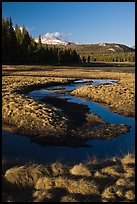 Grasses and stream, late afternoon, Tuolumne Meadows. Yosemite National Park, California, USA.