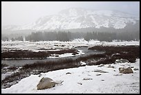 Snowy landscape near Tioga Pass. Yosemite National Park ( color)