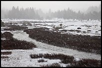 Falling snow streaks, river and meadow. Yosemite National Park ( color)