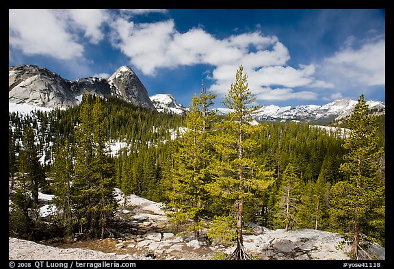 Pine trees in spring and Fairview Dome, Tuolumne Meadows. Yosemite National Park (color)