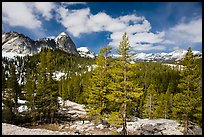 Pine trees in spring and Fairview Dome, Tuolumne Meadows. Yosemite National Park, California, USA.