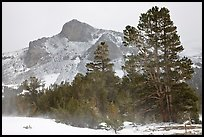 Trees and peak with fresh snow, Tioga Pass. Yosemite National Park, California, USA.