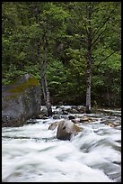 Merced River cascades, boulder, and trees, Happy Isles. Yosemite National Park, California, USA.