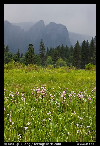 Wildflowers in Cook Meadow and Cathedral Rocks in storm. Yosemite National Park (color)