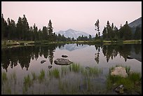 Alpine tarn near Tioga Pass and reflections at sunset. Yosemite National Park, California, USA.