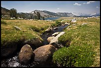 Alpine scenery with stream and distant Gaylor Lake. Yosemite National Park, California, USA.