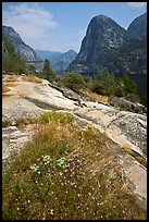 Summer wildflowers, Kolana Rock, and Hetch Hetchy reservoir. Yosemite National Park, California, USA. (color)