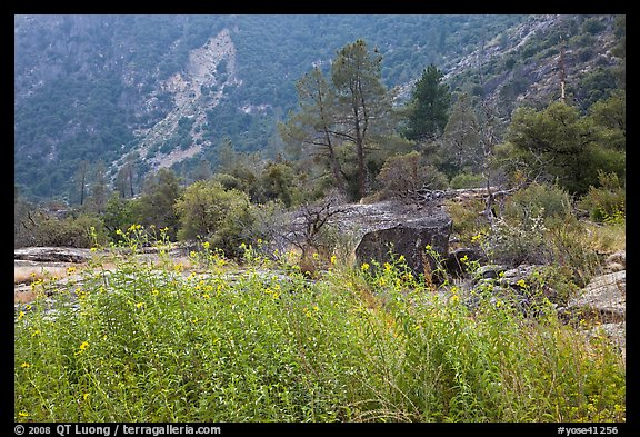 Flowers and trees, Hetch Hetchy. Yosemite National Park (color)