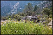 Flowers and trees, Hetch Hetchy. Yosemite National Park, California, USA. (color)