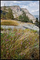 Flowers, grasses, and Hetch Hetchy Dome. Yosemite National Park, California, USA.