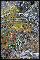 Dead branches, brush, and rock, Hetch Hetchy. Yosemite National Park, California, USA. (color)