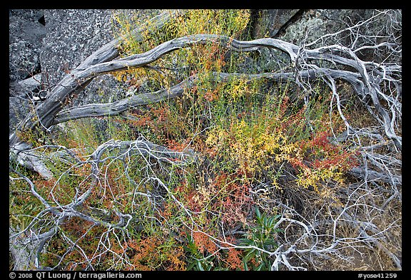 Dead branches, shrubs, and rocks, Hetch Hetchy. Yosemite National Park (color)
