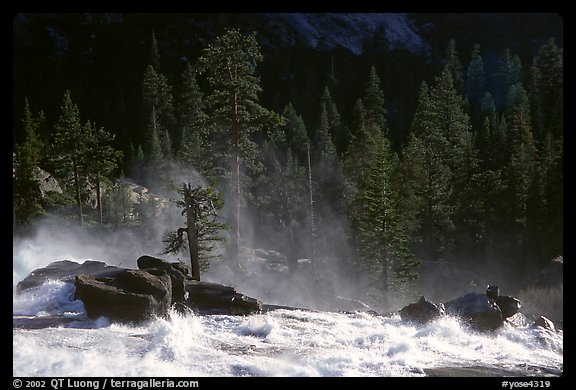 Tree in swirling waters, Waterwheel Falls, late afternoon. Yosemite National Park (color)