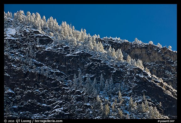 Frosted trees on valley rim. Yosemite National Park, California, USA.