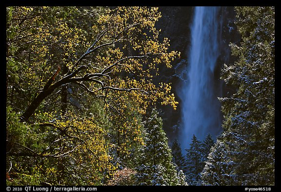 Bridalveil Fall framed by snowy trees with new leaves. Yosemite National Park (color)