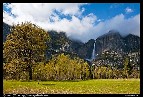 Meadow, trees, and Yosemite Falls in spring. Yosemite National Park (color)