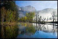 Merced River and early morning fog. Yosemite National Park, California, USA. (color)