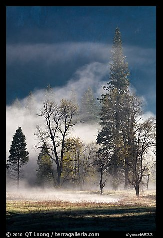 Morning fog and trees. Yosemite National Park (color)