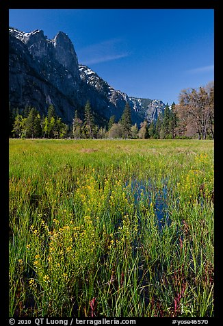 Wildflowers, Cook Meadow, and Sentinel Rock. Yosemite National Park (color)