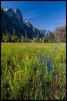 Wildflowers, Cook Meadow, and Sentinel Rock. Yosemite National Park ( color)