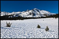Suncups in Dana Meadow and Mammoth Peak. Yosemite National Park ( color)