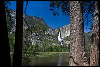 Yosemite Falls and flooded meadow framed by pines. Yosemite National Park, California, USA. (color)