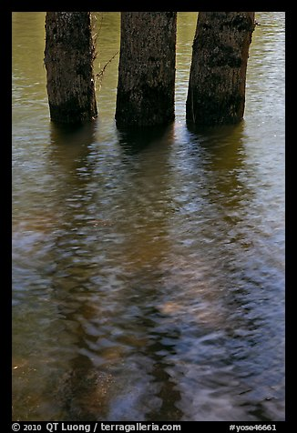 Three flooded tree trunks. Yosemite National Park (color)