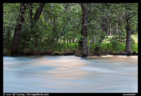 Merced River and trees on bank at sunset. Yosemite National Park (color)
