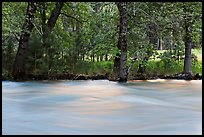Merced River and trees on bank at sunset. Yosemite National Park ( color)