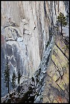 Trees and cliff, Diving Board. Yosemite National Park ( color)