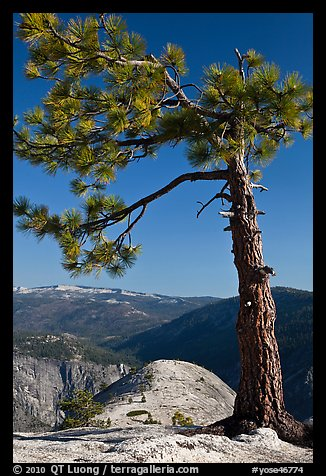 North Dome framed by pine tree. Yosemite National Park (color)