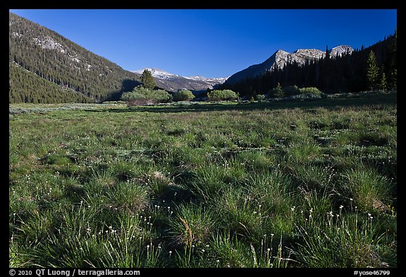 Meadow in Lyell Canyon, late afternoon. Yosemite National Park (color)
