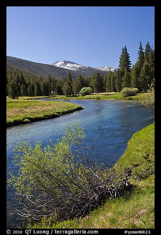 Lyell Fork of the Tuolumne River, morning. Yosemite National Park (color)