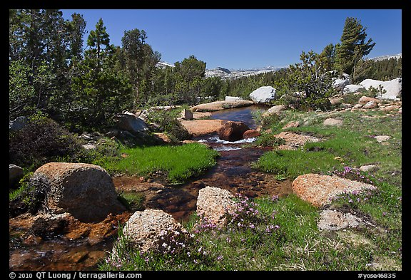 Stream and alpine meadow. Yosemite National Park (color)