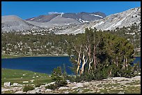 Evelyn Lake and trees. Yosemite National Park ( color)