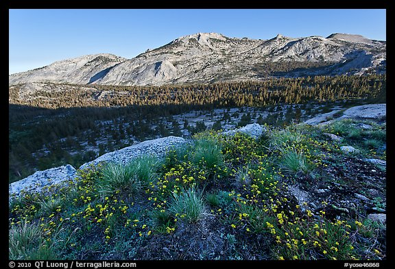 Wildflowers and ridge, Fletcher Creek, early morning. Yosemite National Park (color)