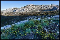 Wildflowers and ridge, Fletcher Creek, early morning. Yosemite National Park ( color)