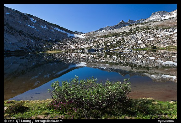 Bush and alpine lake, Vogelsang. Yosemite National Park (color)
