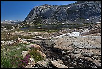 Alpine scenery with flowers, stream, lake, and mountains, Vogelsang. Yosemite National Park, California, USA. (color)