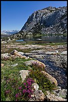 Alpine flowers above Vogelsang Lake. Yosemite National Park, California, USA. (color)