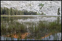 Reeds and reflecions, Merced Lake. Yosemite National Park ( color)