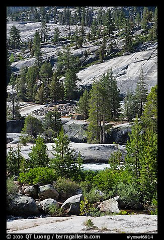 Smooth granite and pine trees. Yosemite National Park (color)