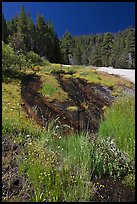 Wet rock slab and wildflowers. Yosemite National Park ( color)