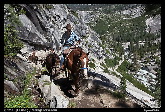 Woman leading horse pack train on trail, Upper Merced River Canyon. Yosemite National Park (color)