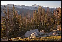 Sunrise over forest and peaks. Yosemite National Park ( color)