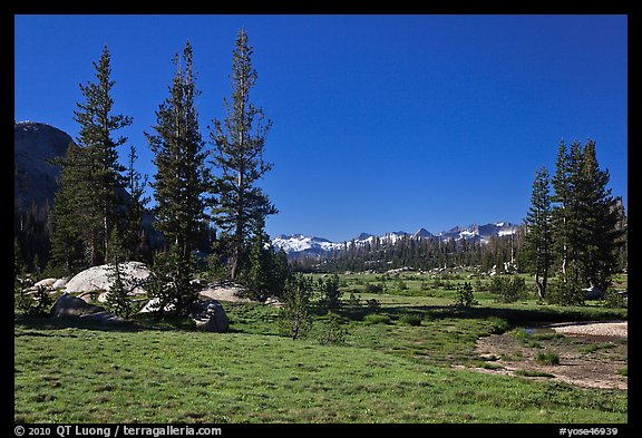 Long Meadow, morning. Yosemite National Park (color)