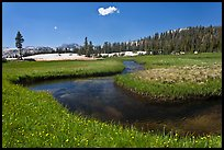 Wildflowers and stream in alpine meadow near Lower Cathedral Lake. Yosemite National Park ( color)