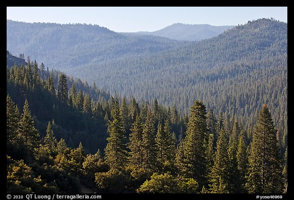 Hills covered in forest, Wawona. Yosemite National Park (color)
