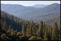 Hills covered in forest, Wawona. Yosemite National Park ( color)